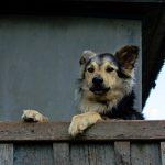Location de vacances acceptant les chiens Gers